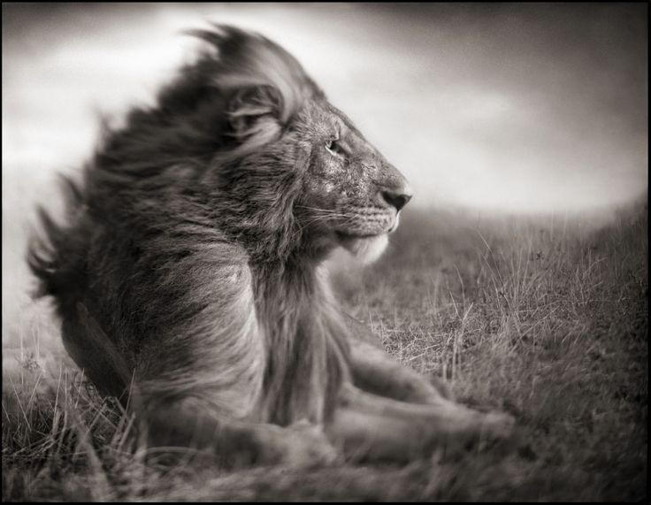 Nick Brandt: Africa's Black and White Photography Master - African Safaris Consultants