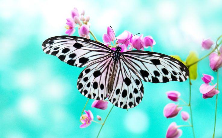 high quality butterfly wallpaper for desktop