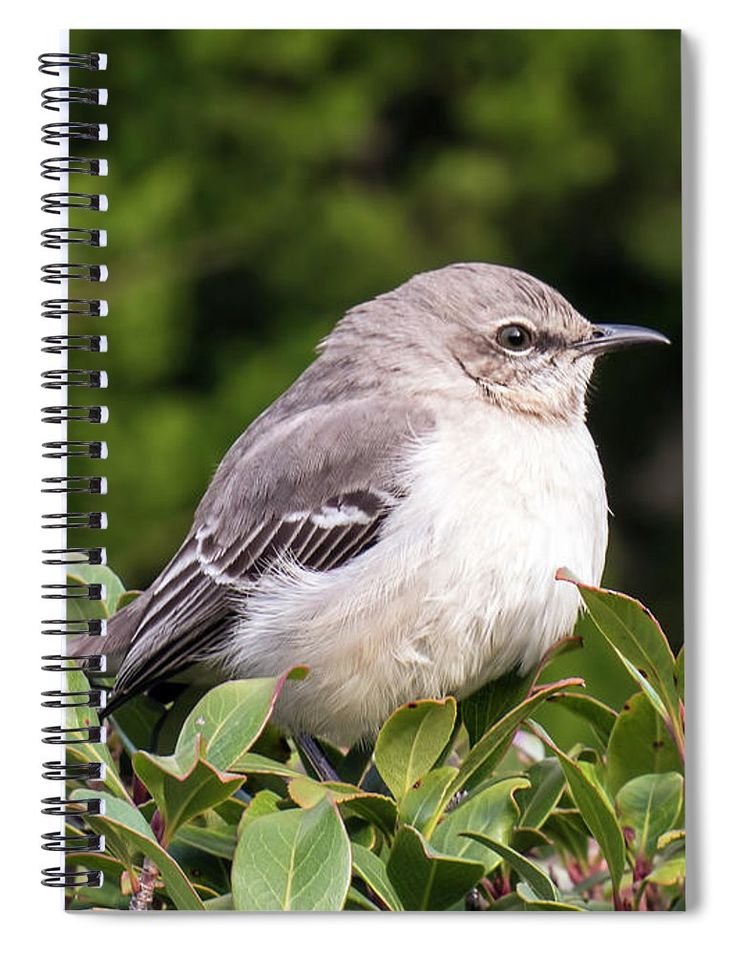 """This 6"""" x 8"""" spiral notebook features the artwork """"Mockingbird"""" by Leslie Montgomery on the cover and includes 120 lined pages for your notes and greatest thoughts."""