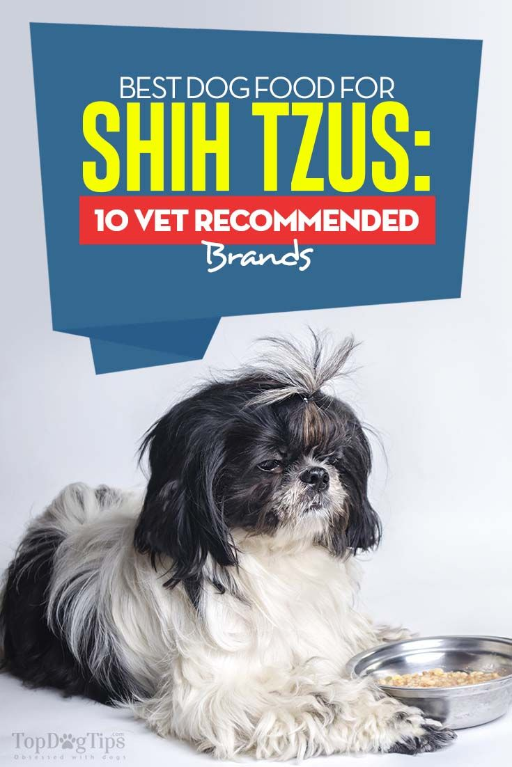 10 Vet Recommended Foods For Shih Tzus Best Dry Dog Food Best