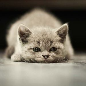 to-turn-the-cat-in-the-pan - meaning of an unusual idiom | 7 Purrfect Idioms via Dictionary.com