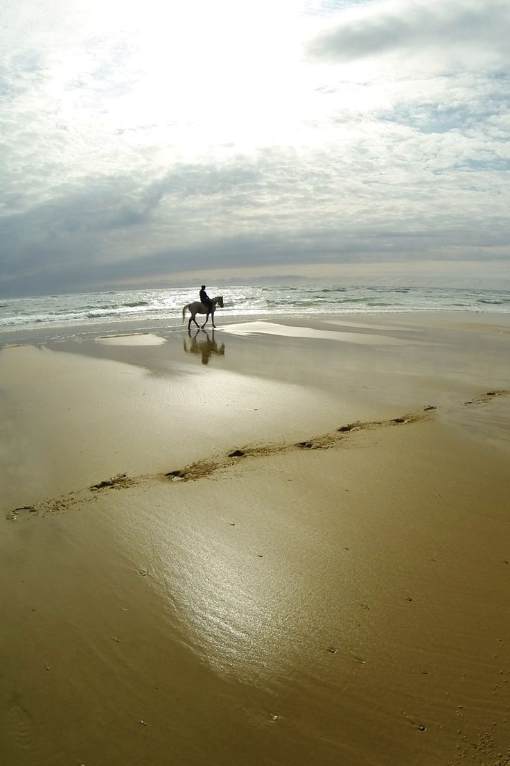 peaceful eye. horse and rider on the beach