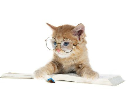 : Stuff, Animal Reading