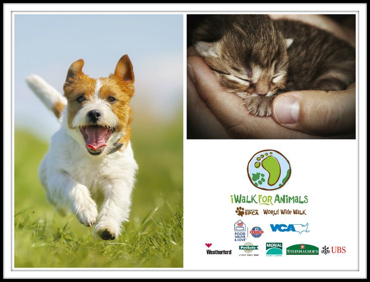 The forecast for Sunday's iWalk for Animals event will be spectacular with sunshine and temperatures in the upper 60's.  Register today and help us give orphaned, abused and neglected animals a second chance at life. www.iwalkforanimals.org.