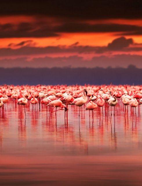 地球の不思議!フラミンゴをピンク色に染める世界の絶景湖3選
