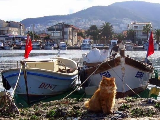 """Izmir (Esmirna) é uma cidade do sudoeste da Turquia situada na Região do Egeu. Considerada a """"pérola do Egeu"""". Não faltam motivos de interesse turístico nesta zona... Apesar disto, o turismo ainda não é a indústria determinante da economia da cidade. O comércio e a produção de seda, algodão, tecidos e tapetes são a sua principal fonte de rendimento. O porto de Izmir é um dos principais responsáveis pelo comércio de e para a Europa."""