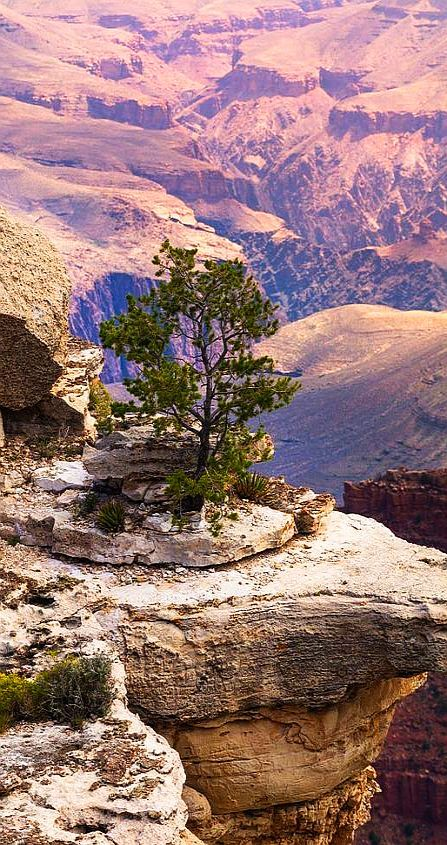 North Rim, Grand Canyon National Park, Arizona, USA #by Radius Images #landscape nature tree