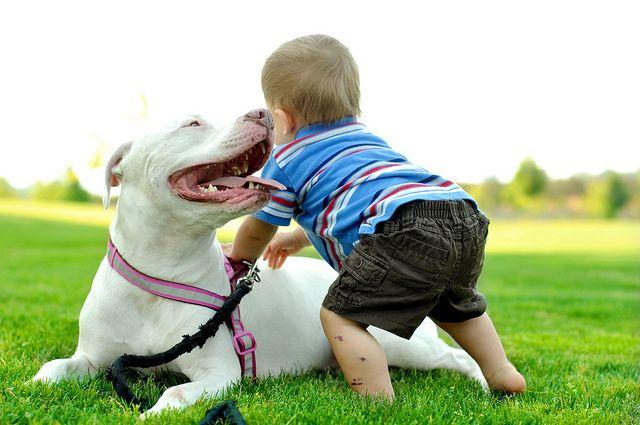 Pitbulls...such beasts. Not.Pitbulls Such Sweets, Pitbull Such Beast, Pitbullssuch Beast, Pitbull And Kids, Pit Bull, Beast Psht, Pitbulls Such Beast, Adorable Animal, Pitbulls Vici