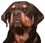 ROTTWEILER RESCUE GROUPS NATIONWIDE