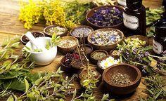 Phytotherapie - Die Pflanzenheilkunde