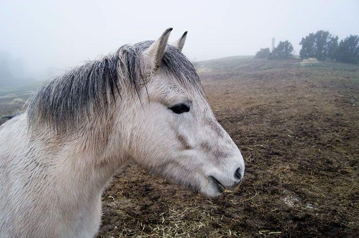 Horse. Gotland, Sweden.
