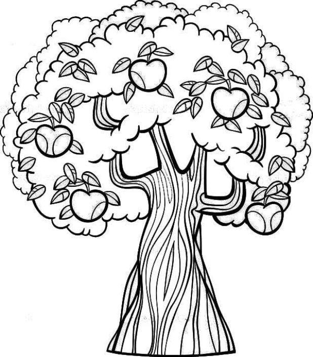 Mewarnai Gambar Pohon Apel Warna Gambar Pohon