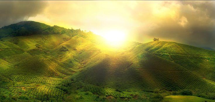 LUZ SOLAR – A partir de la luz del sol, tu cuerpo puede fabricar la Vitamina D, que alarga tus años de vida y salud