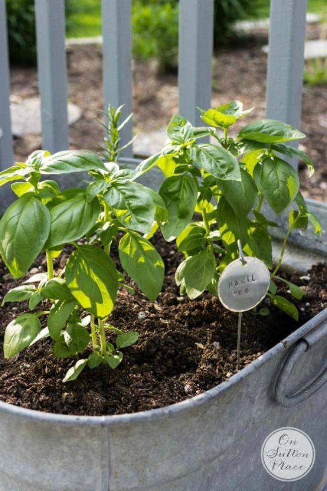 The 11 Best Herb Garden Ideas The Eleven Best