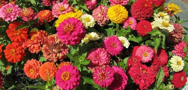 5 Most Popular Flowers, U.S., Garden, Outdoors, Poll - Bombay Outdoors
