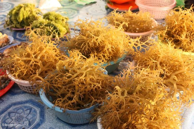 Use carrageenan to add texture to daily food products