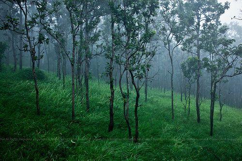 Sai Tong National Park, Chaiyaphum, Thailand