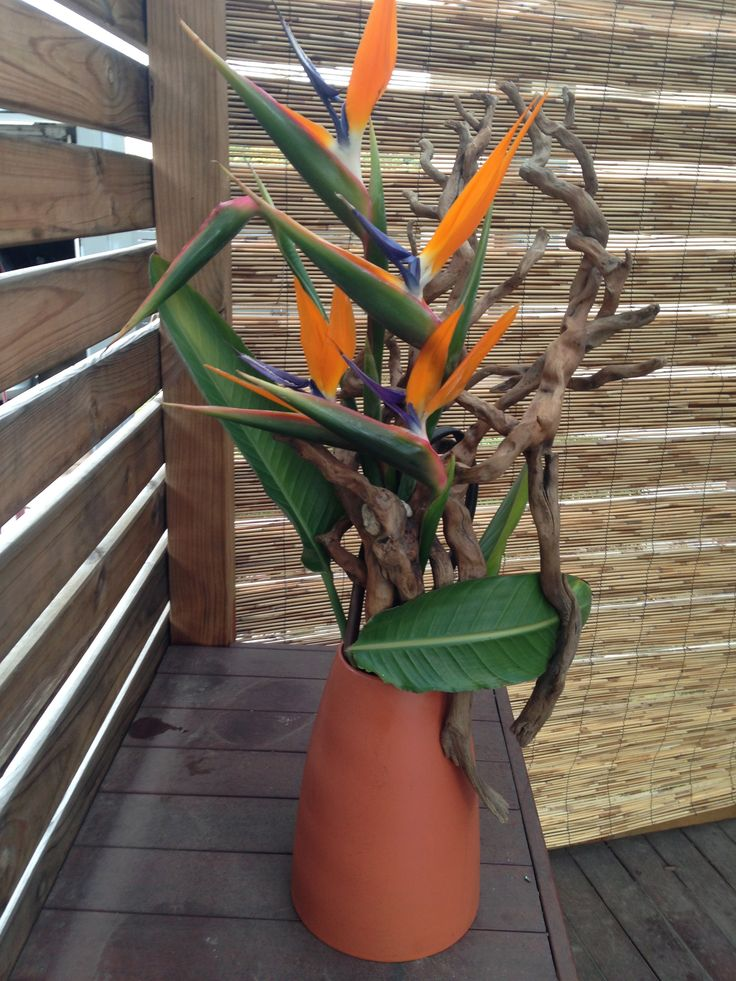 Bird of Paradise with Driftwood