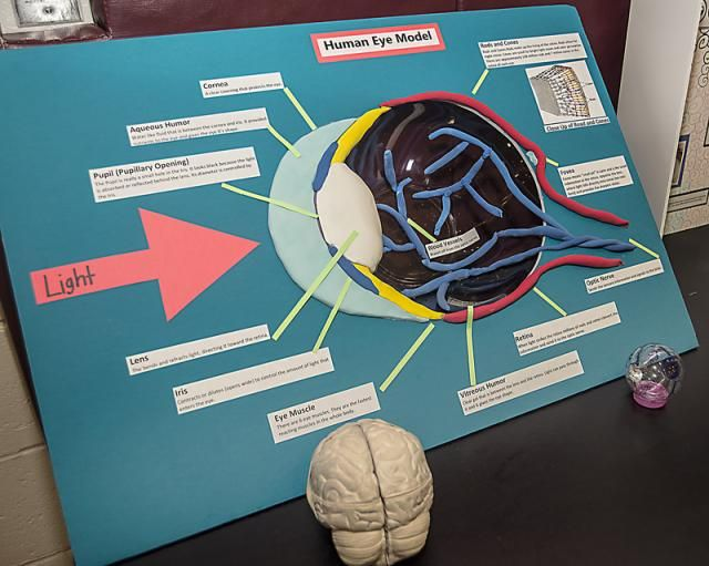 biology research project ideas Find and save ideas about biology projects on pinterest | see more ideas about biology for kids, biology scientists and teaching biology.
