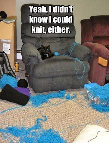 :D: Dogs, Funny Pictures, Funny Cat, Funny Stories, Yarns, Funny Commercial, Funny Photo, Silly Cat, Baby Cat
