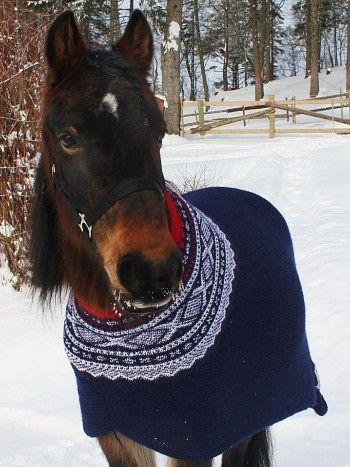Hesten Knerten har fått Mariusgenser - Ida Nova fra Bodø strikket i vinter en 'Marius-genser' til hesten Knerten. Genseren i NRKs rekordfors...