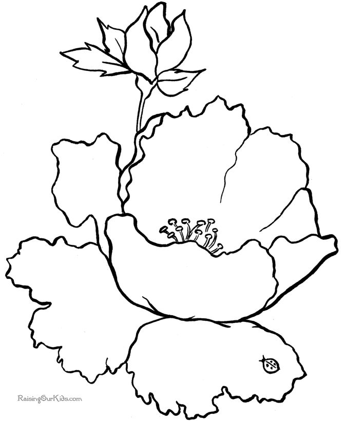 Free flower coloring sheets Flower coloring pages