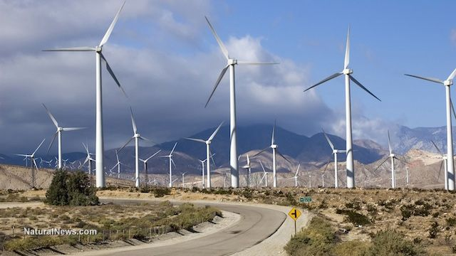 """Remember the """"green environmentally friendly"""" Obama regime? When it comes to funding expensive wind farms, to heck with endangered species like golden eagles. Feds grant wind farm operators 30-year license to kill endangered species."""