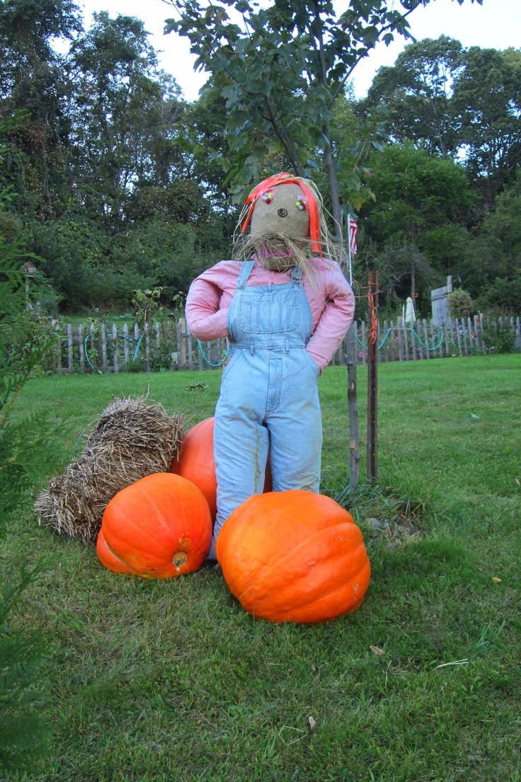 Fall decor 2012. I made this scarecrow at Bemis farms but grew the pumpkins at my house!