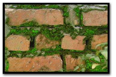 Love the mossy brick as a walkway or patio.