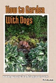 Tips for gardening with dogs