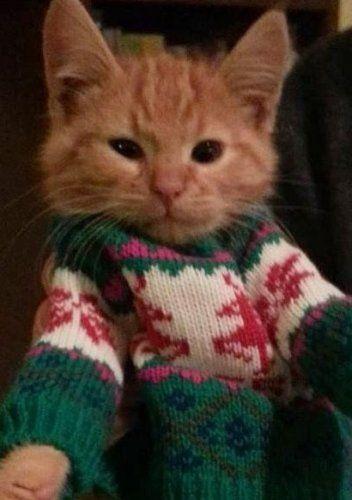 "* * "" Seems to meez; yoo ain't gotz de sense God gaves a goat. Christmas sweaterz be allz rank to me."""