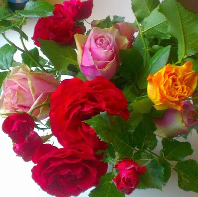 Lovely mix of roses