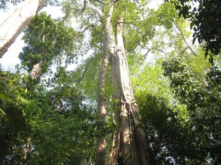 Die Bäume im Cat Tien Nationalpark - #AsiaticaReisen