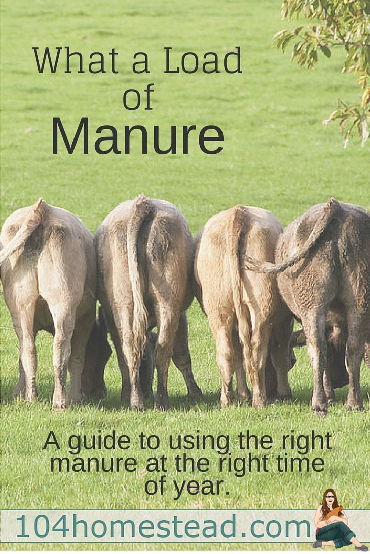 What A Load of Manure - Black gold. It's essential in the garden. Most choose the bovine poo, but there are many manure options to choose from, each with their own unique benefits.::