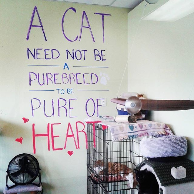 """A cat need not be a purebreed to be pure of heart"" (2017)"