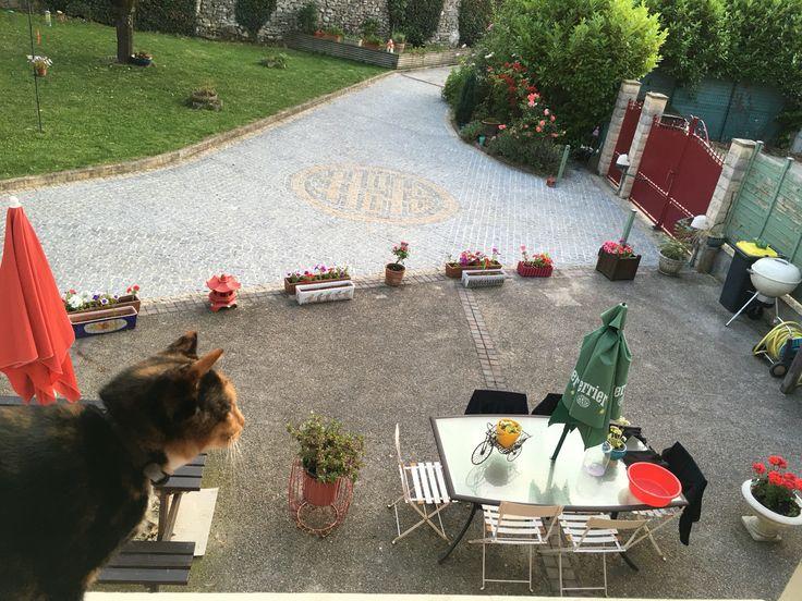 我的花园2016年七月