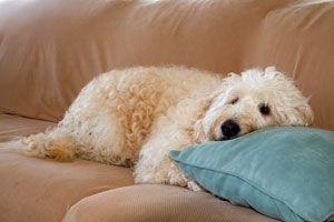 ***Métodos para Quitar el Olor a Perro*** Conoce 7 ideas para quitar el olor a perro de tu coche, de tu casa y de todos tus ambientes...SIGUE LEYENDO EN... http://hogar.comohacerpara.com/n10937/metodos-para-quitar-el-olor-a-perro.html