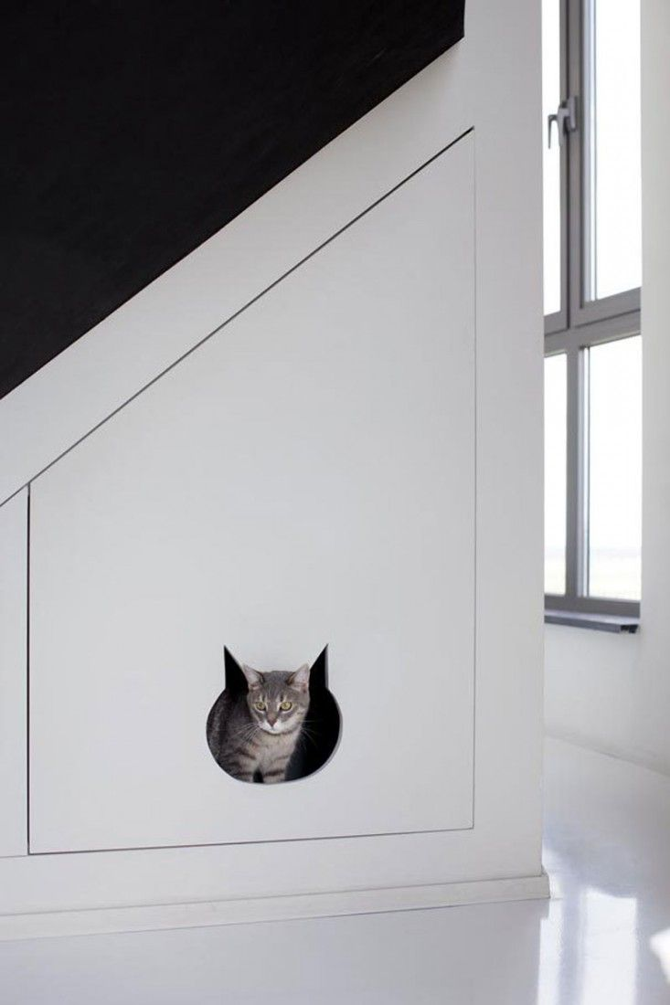 CREATIVE SOLUTIONS TO LIVING WITH A KITTY LITTER BOX
