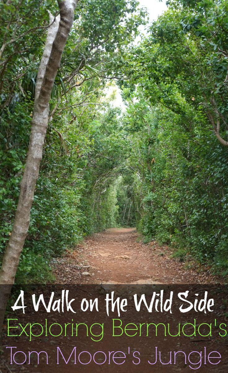Explore the beautiful Tom Moore's Jungle, one of Bermuda's hidden gems
