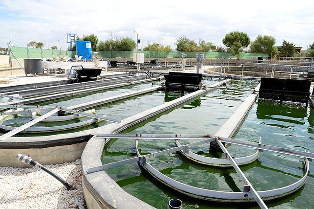 El principal objetivo de la iniciativa CENIT VIDA, en la que participan 13 empresas y 25 organismos de investigación, es crear un nuevo concepto de Biociudad, Autosuficiente y Sostenible (BioCAS) a través del desarrollo de microalgas
