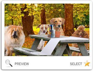 A Thanksgiving Message dog ecard