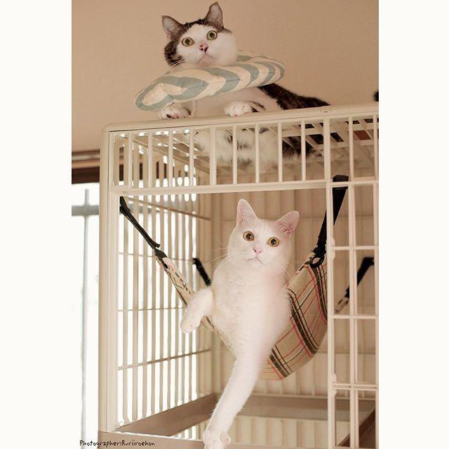 八・おこ『産まれたって!!』❤︎ 今さっき弟から連絡あって、私…おばちゃんになりました♩ かわいい女の子誕生〜✨✨ 写真は昨日お友達( @floatingaquarium )に撮ってもらった、キラッキラなハッチャンおこちゃん♩ #福の日祭 #八おこめ #ねこ部 #cat #ねこ