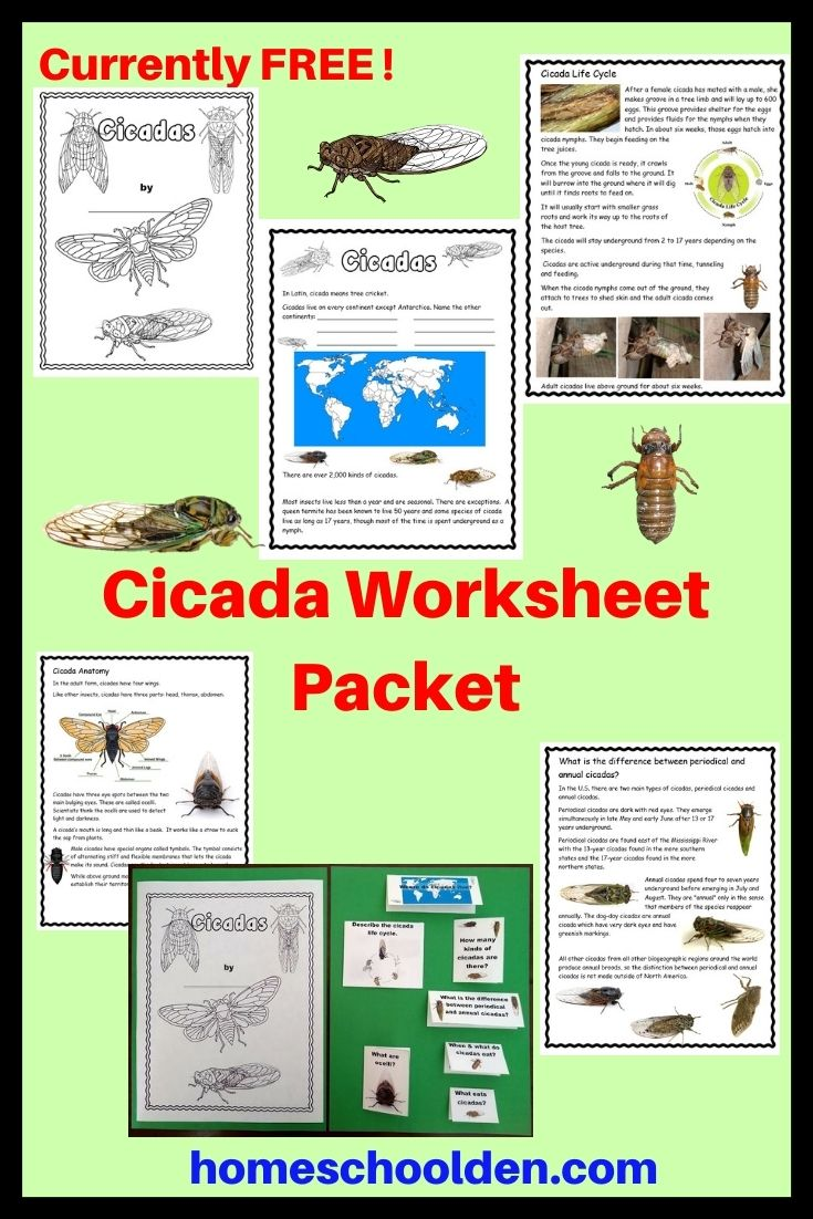 Cicada Worksheet Packet Homeschool Homeschool Science Homeschool Activities