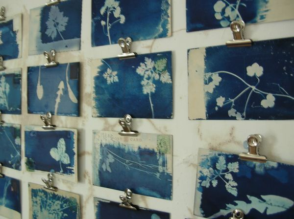 cyanotype photograms of flowers displayed simply with clips