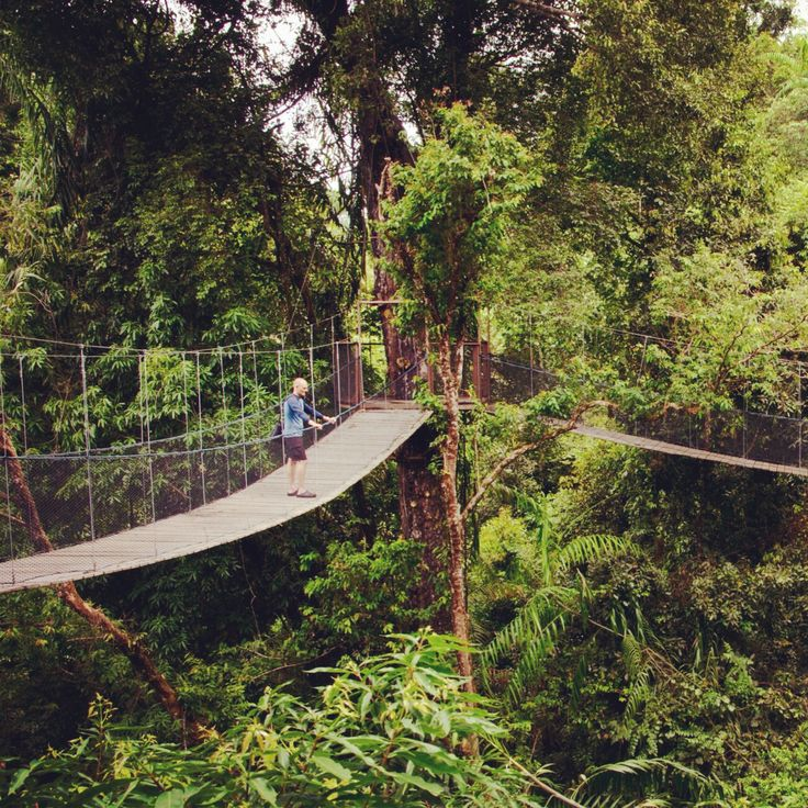 Seven Skies' founder Nathan Wedding walking on top of the rainforest in Borneo.