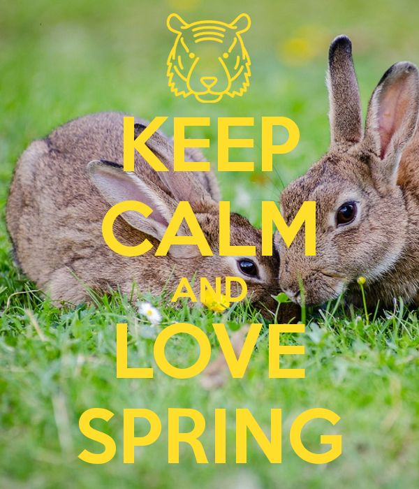 'KEEP CALM AND LOVE SPRING' Poster