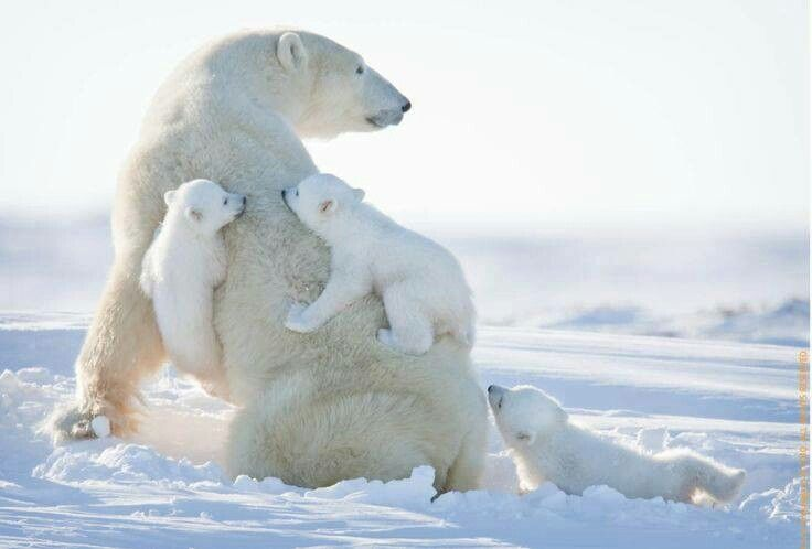 The Daily Cute: Five for Friday: Animals Hugging