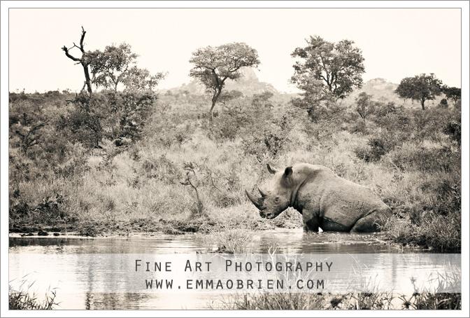 Rhino  http://emmaobrien.com