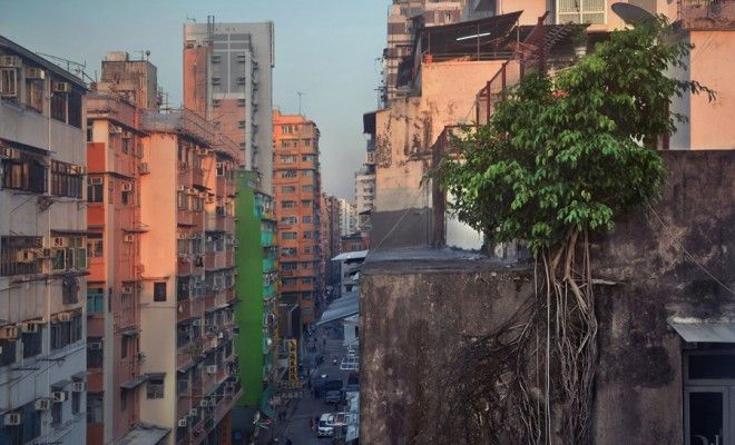 """These photos give """"Concrete Jungle"""" a Whole New Meaning - Greener Ideal"""