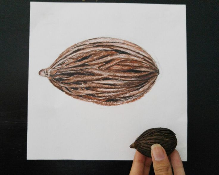 A drawing of a natural object, a dried fruit, usinh color pencil to communicate the uniqueness of the texture.